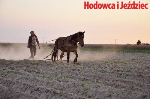 Zachód słońca, przyjemnie ciepły letni wieczór – czymoże być przyjemniejszy moment napracę koniem fot.Ewa Jastrzębska