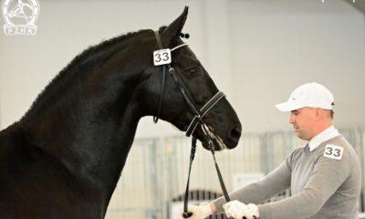 prezentacja konia - Hodowca i Jeździec