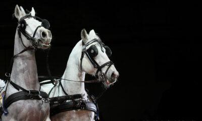 Małgorzata Sieradzan Photography - Hodowca i Jeździec