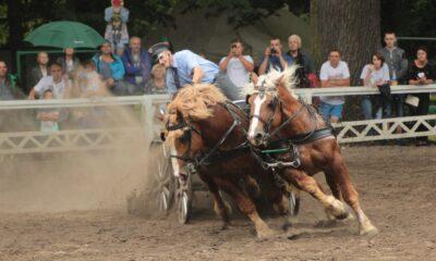 fot. Izabela Ciepła - Hodowca i Jeździec