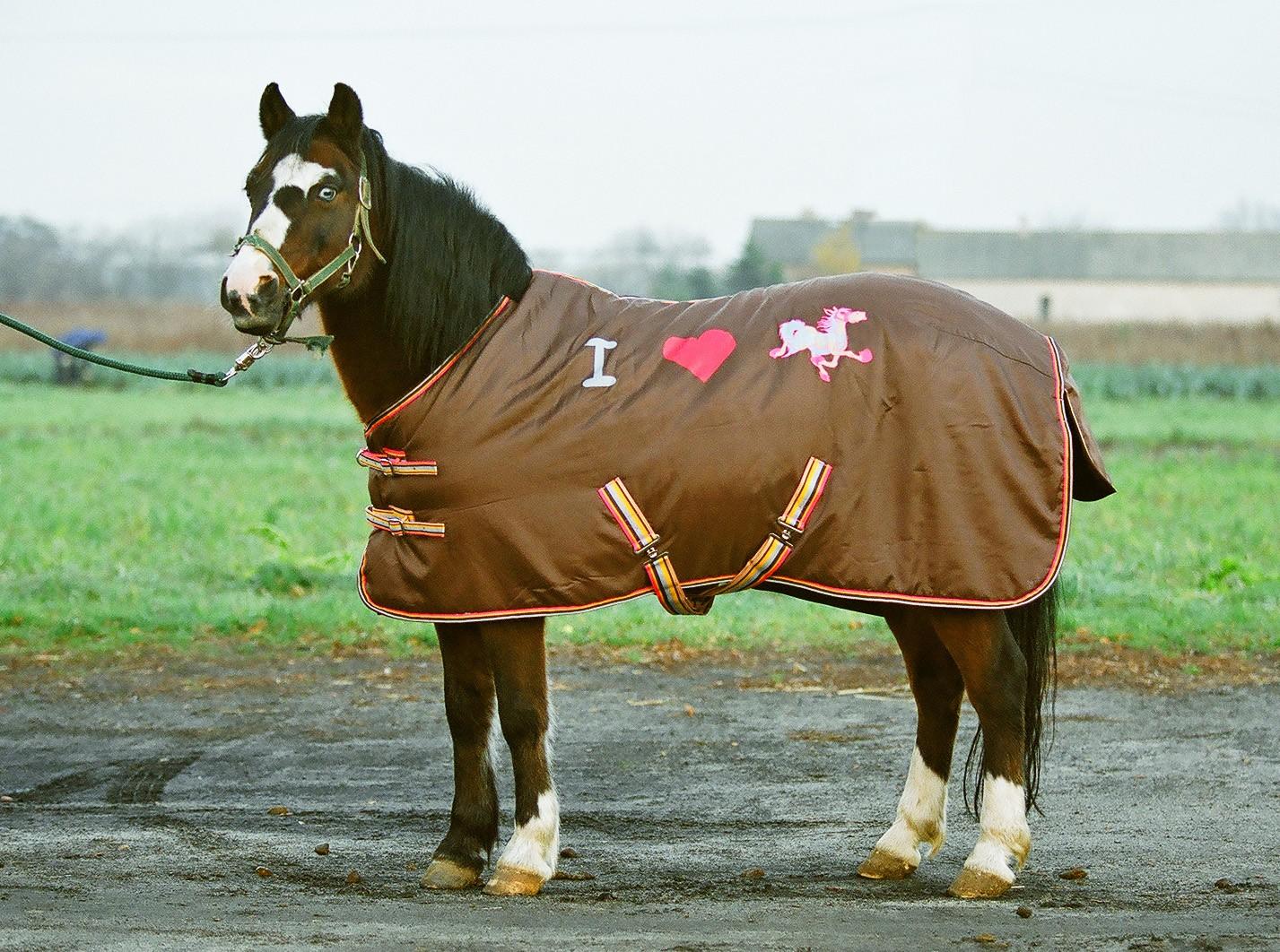 Koń w derce