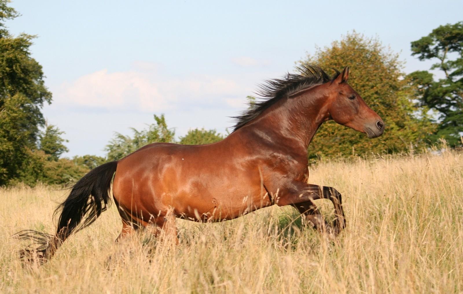 Koń z lśniącą sierścią