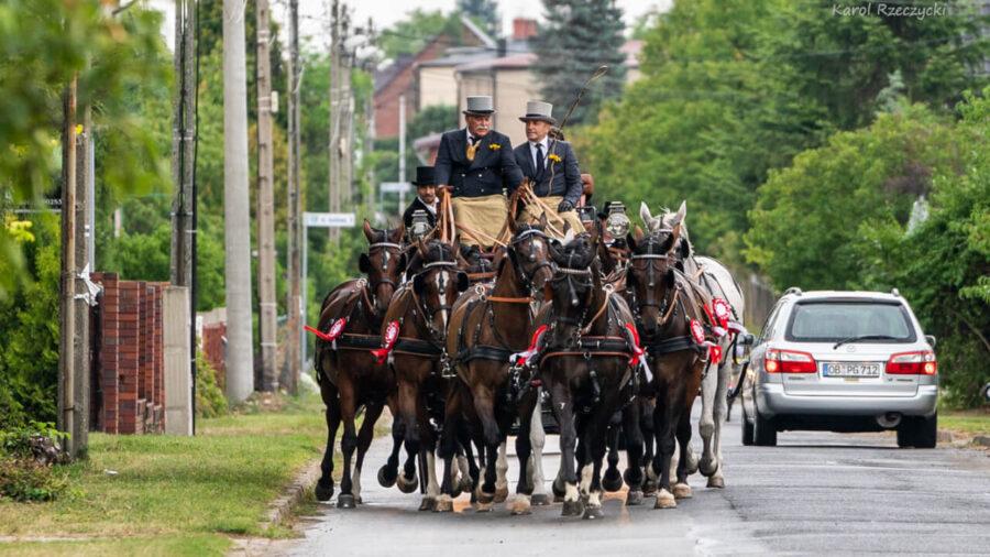 10 koni w klin pod lejcą Krzysztofa Szustera