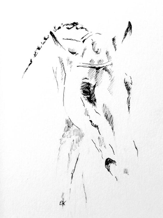 Szkic cienkopisem autorstwa Kingi Bec przedstawiający portret konia.