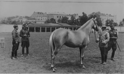 Członkowie komisji remontowej Wojska Polskiego podczas przeglądu koni