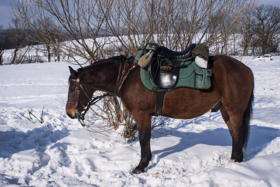 Przykład troczenia półkulbaki rajdowej. Warto zwrócić uwagę na sposób wiązania konia i zabezpieczenia wodzy przed zerwaniem. Tak postępujemy przy krótkich postojach, przy dłuższych zdejmujemy siodła i ogłowia