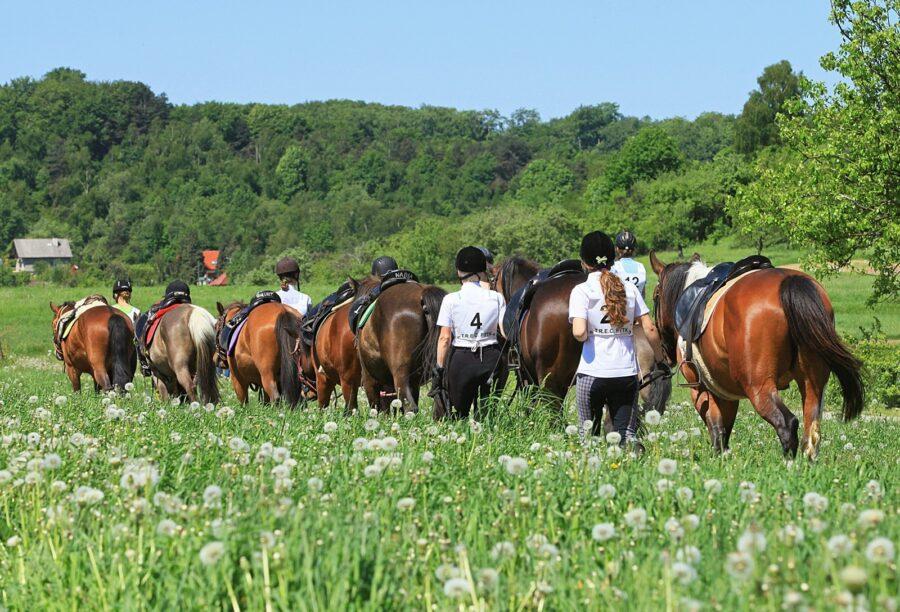 TREC nie narzuca stylu jazdy ani rasy koni - w zawodach mogą startować i te duże, i te mniejsze