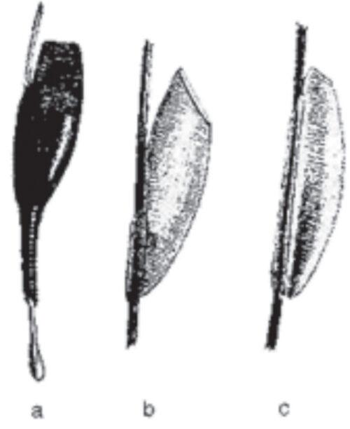 Rys. 7