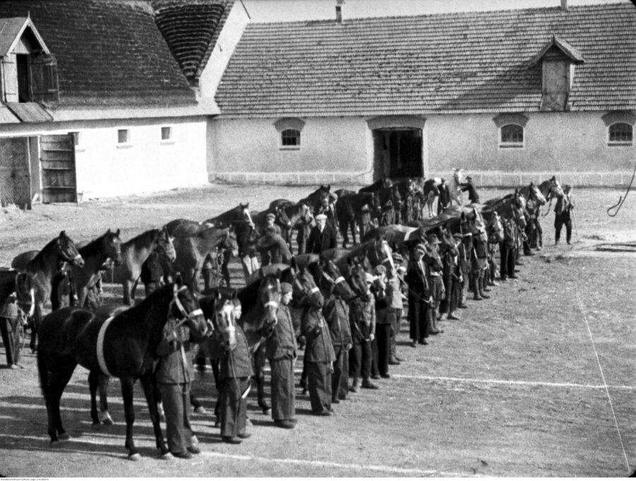 Hodowla koni remontowych hrabiego Antoniego Lanckorońskiego w Jagielnicy