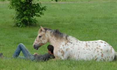 Koń leżący na trawie