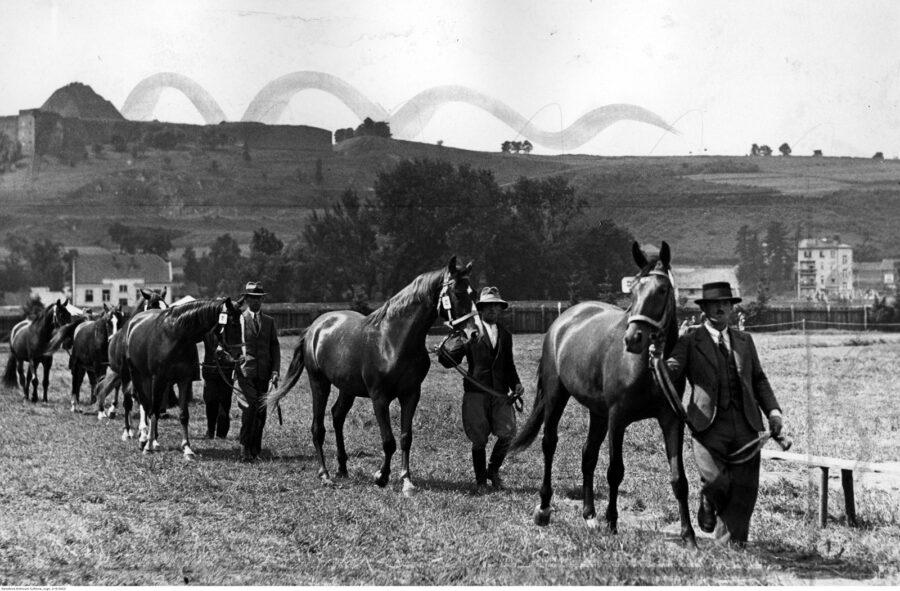 Konie remontowe z hodowli w Nowym Sączu - grupa koni z opiekunami
