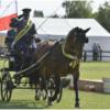 drving.pl - Hodowca i Jeździec