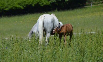 Moszna Rekrutacja Hodowca i Jeździec