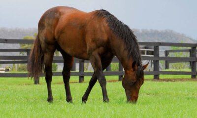 koń na łące