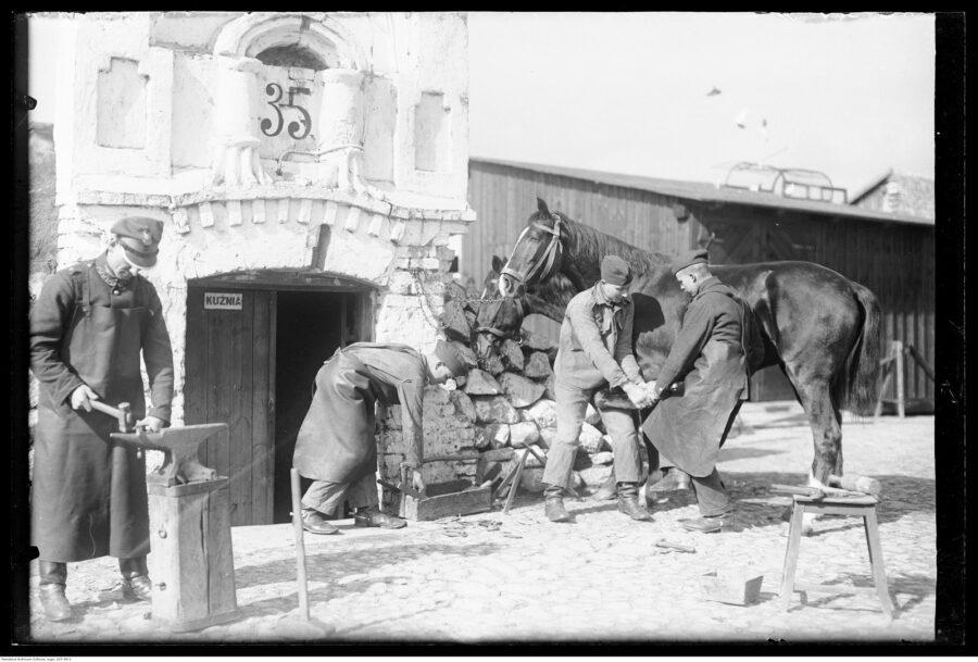 Opieka nad końmi w Szwadronie Przybocznym Prezydenta RP w koszarach przy ulicy 29 Listopada w Warszawie