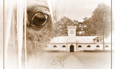 Pride of poland - Hodowca i Jeździec