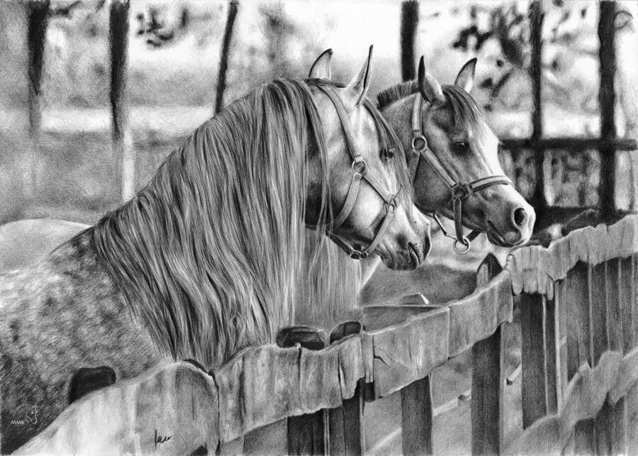 Rysunek koni napadoku