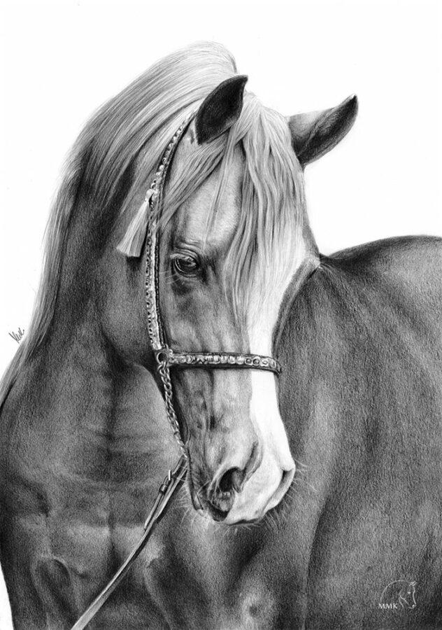 Rysunek konia Psyche Amor