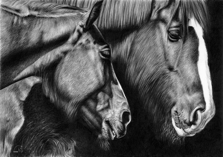 Rysunek koni zimnokrwistych zimą